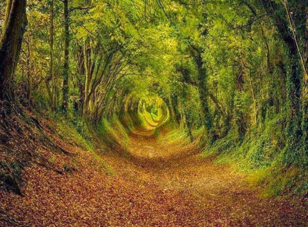 14-most-beautiful-tree-tunnels-15