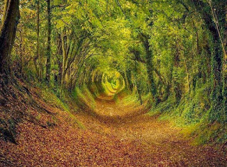 14-most-beautiful-tree-tunnels-15-1
