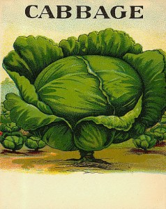 free-vintage-color-illustration-of-cabbage-image-2